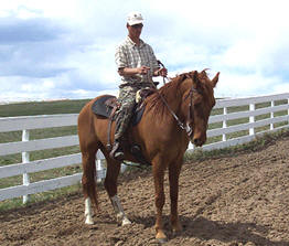 Rocky Mountain Horse King displays the beauty and manners of a Spring Meadow gaited horse under saddle.