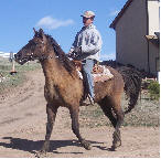 Rocky Mountain Gaited Horses - 7-year-old certified chocolate/flax mare - great gait, very fast